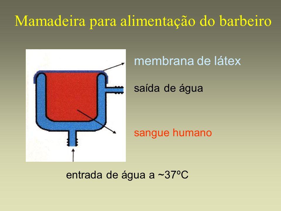 Mamadeira para alimentação do barbeiro membrana de látex entrada de água a ~37ºC sangue humano saída de água