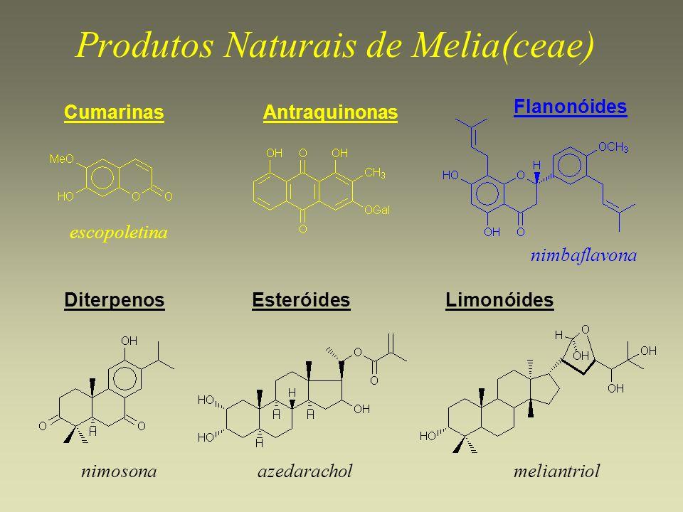 Produtos Naturais de Melia(ceae) CumarinasAntraquinonas Flanonóides DiterpenosEsteróidesLimonóides escopoletina azedarachol nimbaflavona nimosonamelia