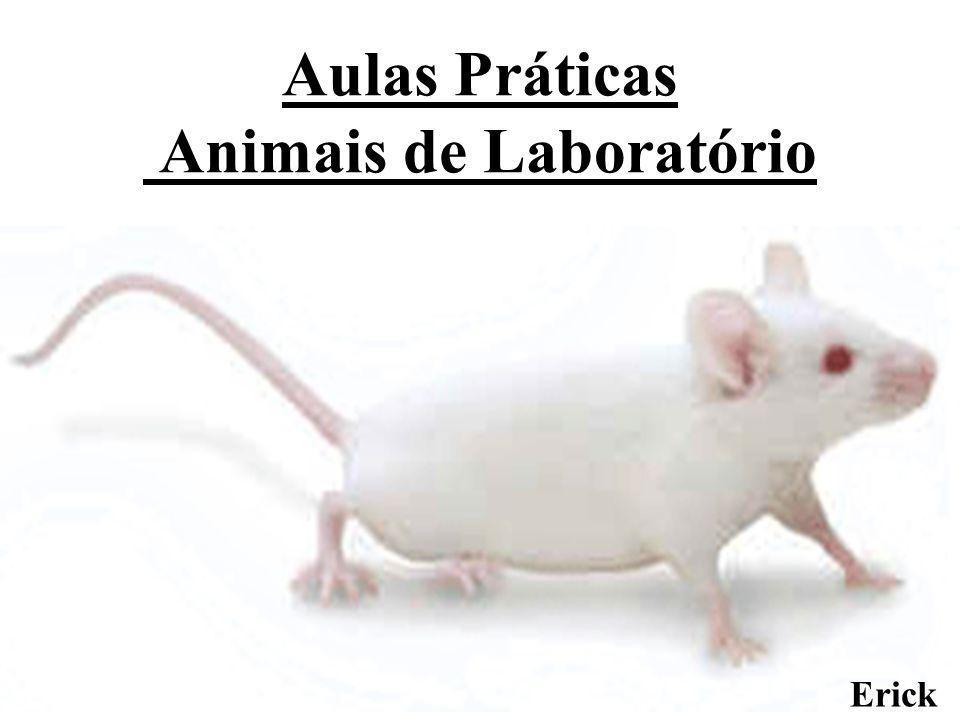 Aulas Práticas Animais de Laboratório Erick