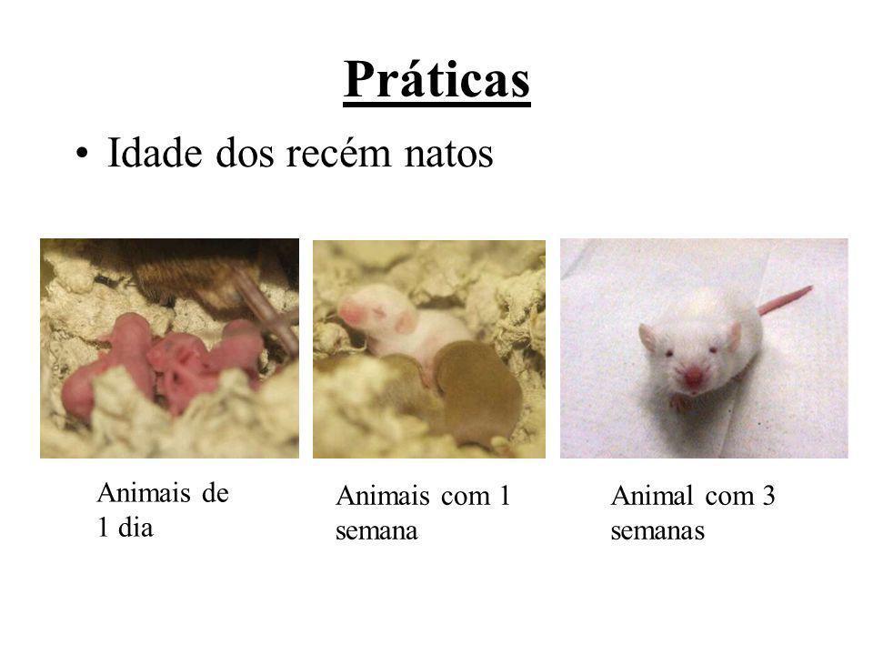 Práticas Animais de 1 dia Animais com 1 semana Animal com 3 semanas Idade dos recém natos