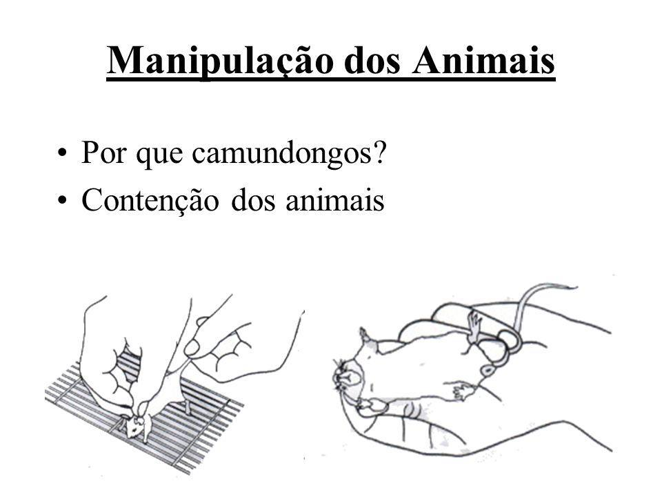 Manipulação dos Animais Por que camundongos? Contenção dos animais