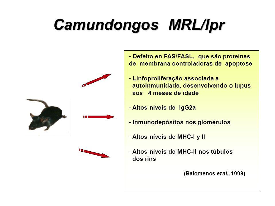 Particularidas Patológicas: AKR – leucemias mielóides LT – tumores ovarianos MDX – distrofia Ducheine fêmea BALB/c – tumor de mama Mutações expontânea