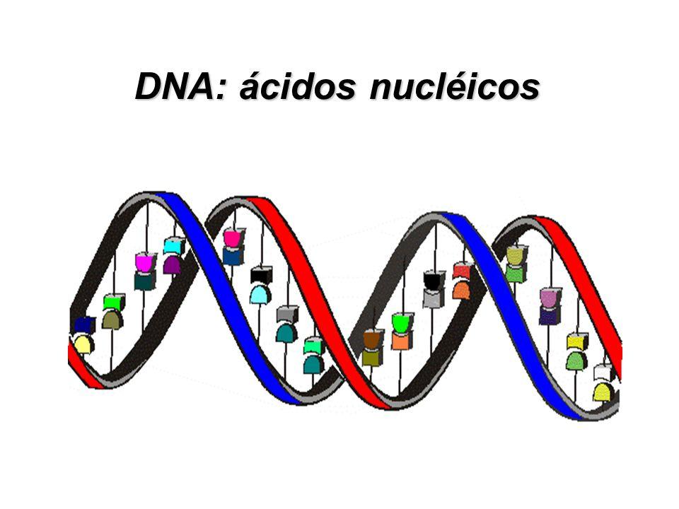 Camundongos MRL/lpr - Defeito en FAS/FASL, que são proteínas de membrana controladoras de apoptose - Linfoproliferação associada a autoinmunidade, des