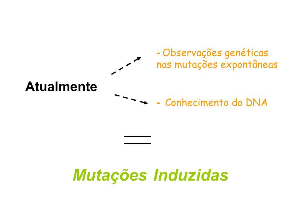 DNA: ácidos nucléicos