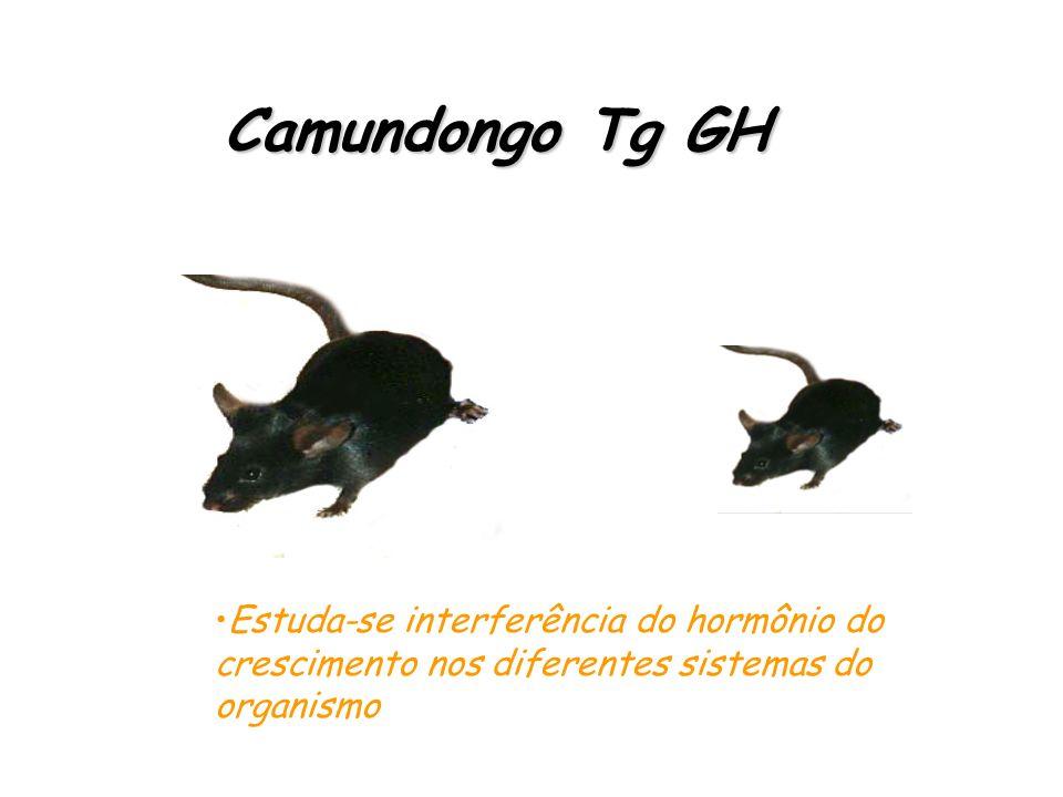 Camundongo MRL/lpr IFN- -/- Camundongo MRL/lpr IFN- -/- - Atraso da enfermidade - Atraso na glomerulonefrite - Câmbio de IgG2a para IgG1 - Reducida li