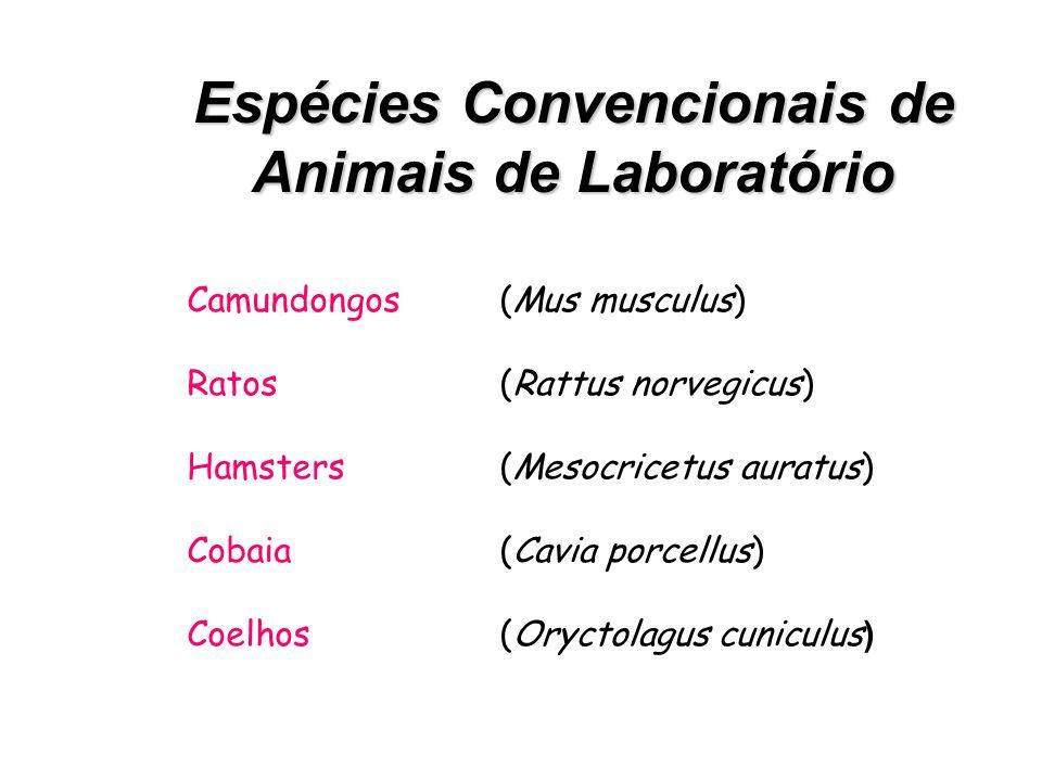Modelos Experimentais Modelos Experimentais - Matemáticos -Físicos -Realidade virtual - Cultura de células -Órgãos isolados Animais