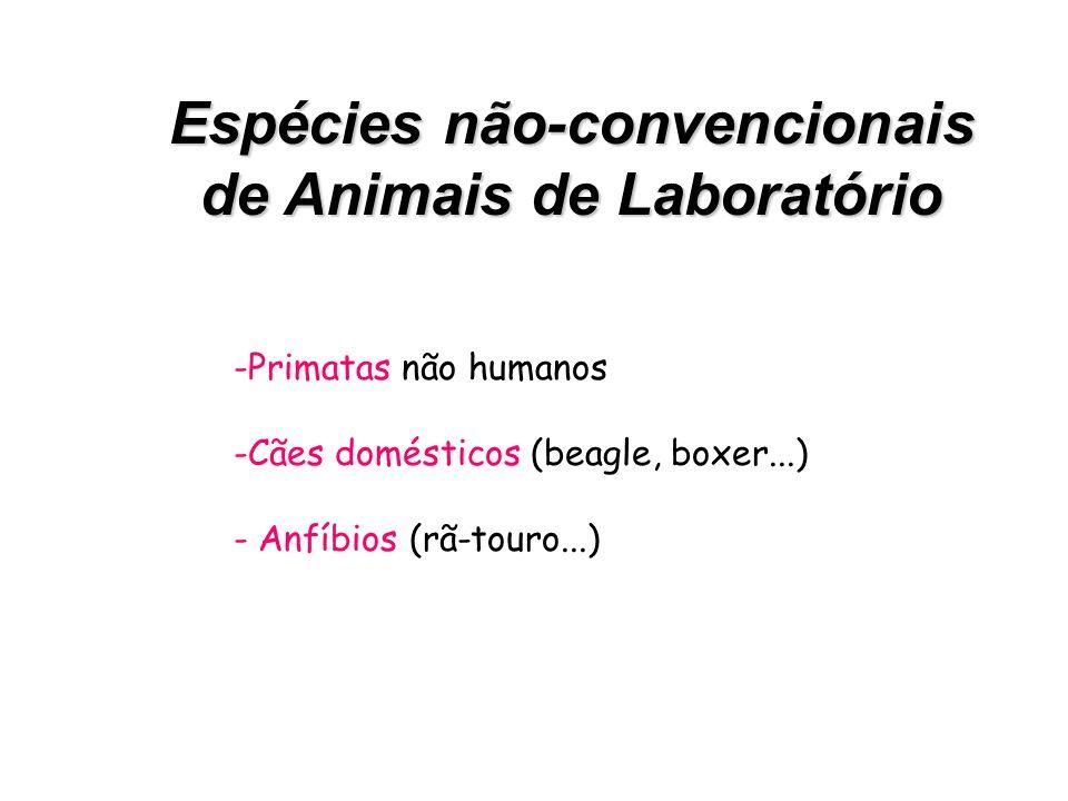 Espécies Convencionais de Animais de Laboratório Camundongos(Mus musculus) Ratos(Rattus norvegicus) Hamsters(Mesocricetus auratus) Cobaia(Cavia porcel