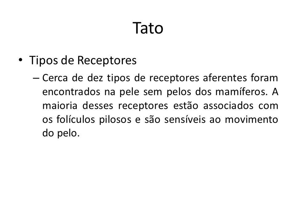 Tato Tipos de Receptores – Cerca de dez tipos de receptores aferentes foram encontrados na pele sem pelos dos mamíferos. A maioria desses receptores e