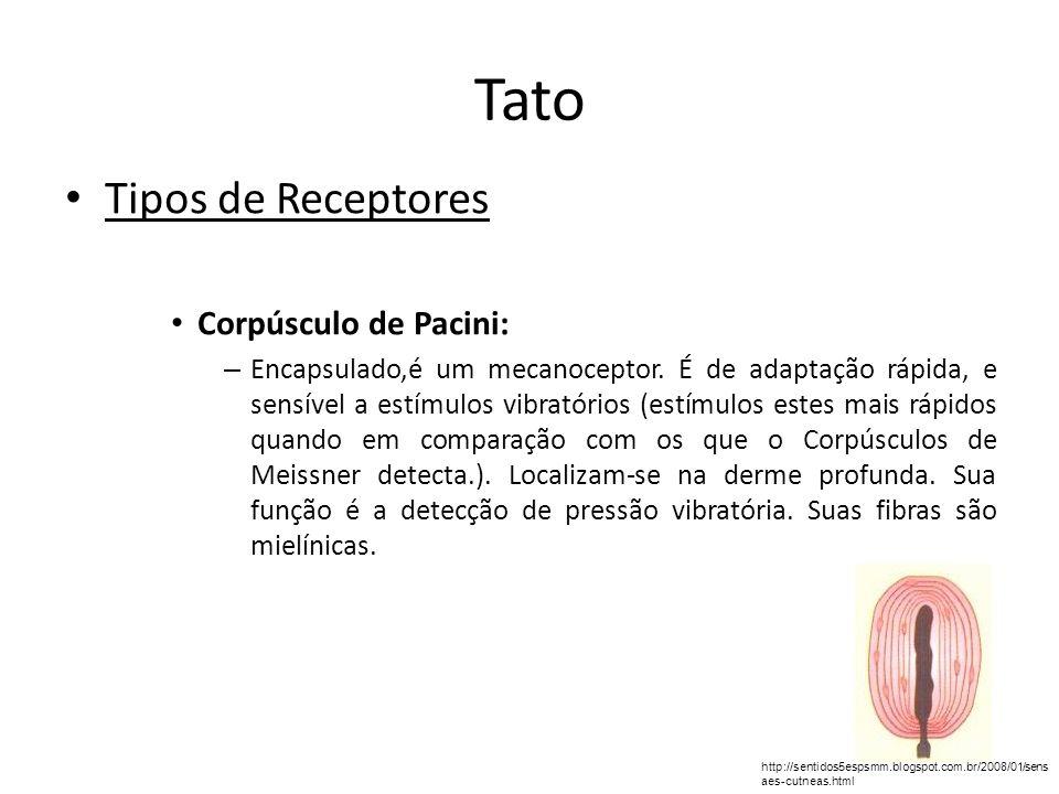 Tato Tipos de Receptores Corpúsculo de Pacini: – Encapsulado,é um mecanoceptor. É de adaptação rápida, e sensível a estímulos vibratórios (estímulos e