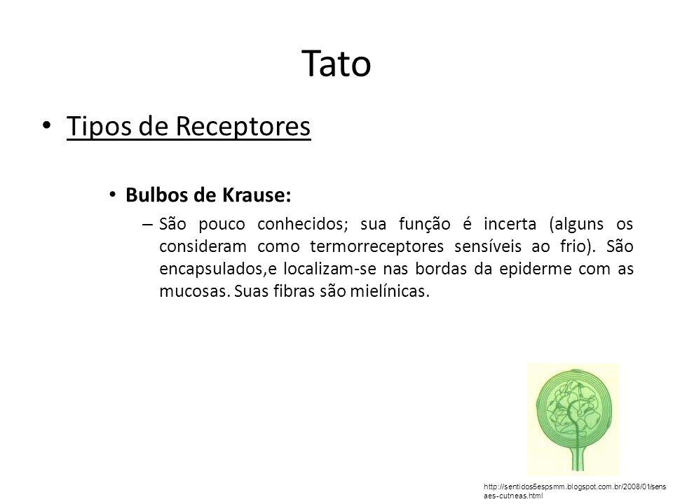 Tato Tipos de Receptores Bulbos de Krause: – São pouco conhecidos; sua função é incerta (alguns os consideram como termorreceptores sensíveis ao frio)