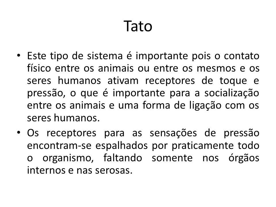 Tato http://www.portalsaofrancisco.com.br/alfa/corpo-humano-sistema-sensorial/sistema-sensorial-5.php