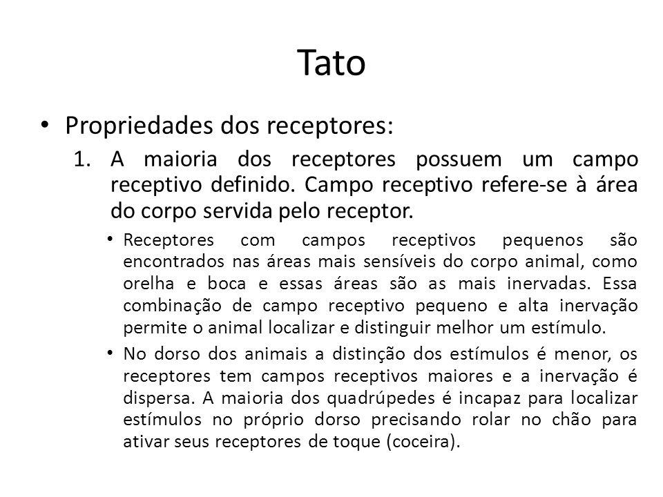Tato Tipos de Receptores – Existem vários tipos de receptores, cada qual com sua função específica: Corpúsculo de Meissner – Encapsulado,faz transdução mecanoelétrica (mecanoceptor).