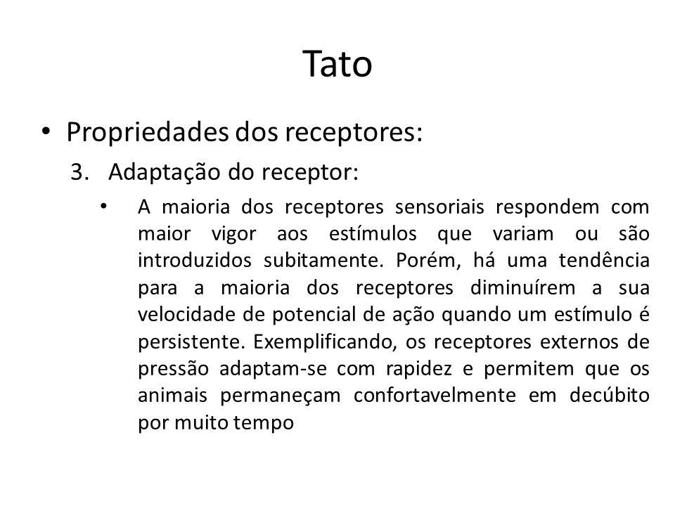 Tato Receptores – Receptores para a sensibilidade de contato: encontram-se logo abaixo da superfície cutânea, com exceção da córnea e conjuntiva ocular e da glande do pênis.