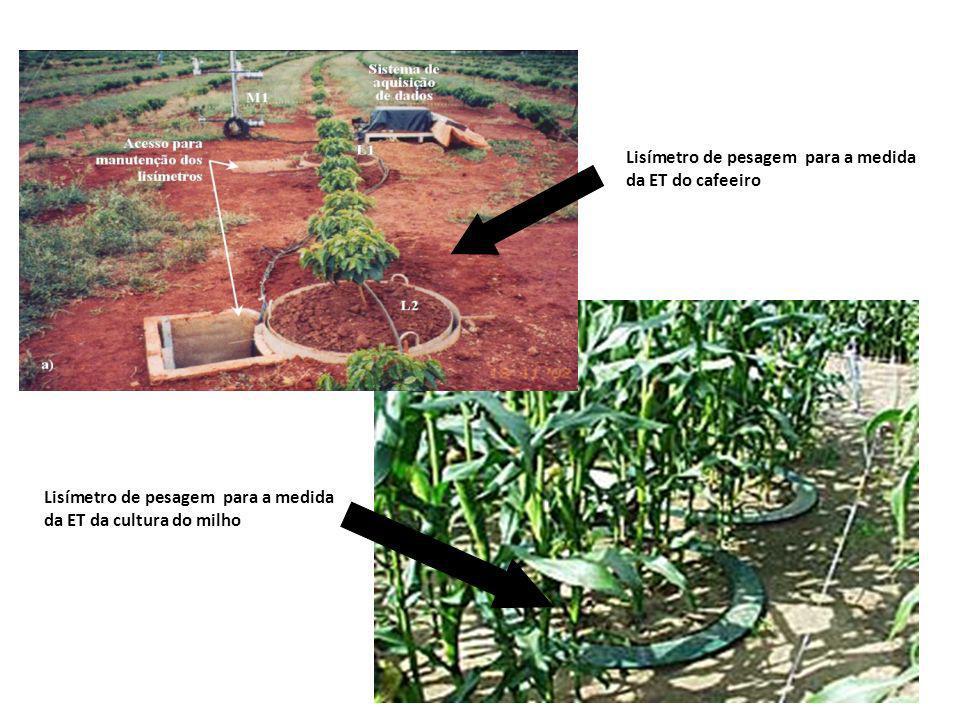 Lisímetro de pesagem para a medida da ET do cafeeiro Lisímetro de pesagem para a medida da ET da cultura do milho