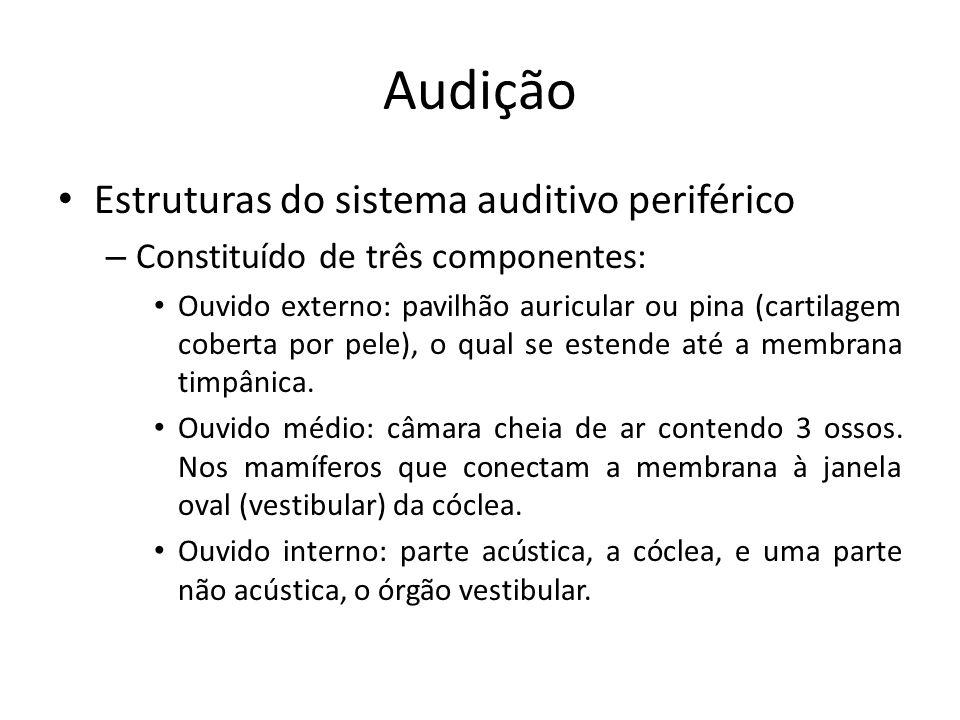 Audição Anatomia – Tuba auditiva (Eustáquio) Conecta a cavidade do ouvido médio à orofaringe.