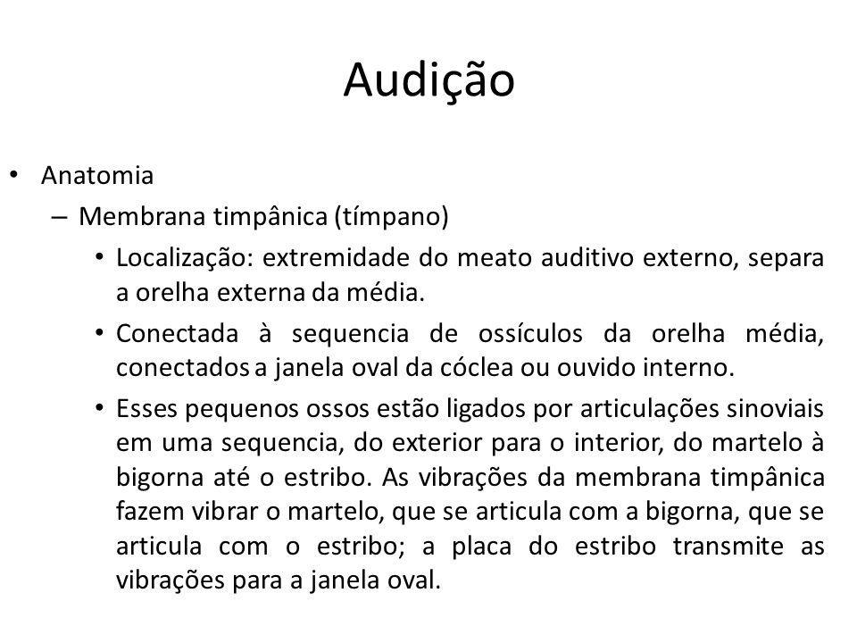 Audição Anatomia