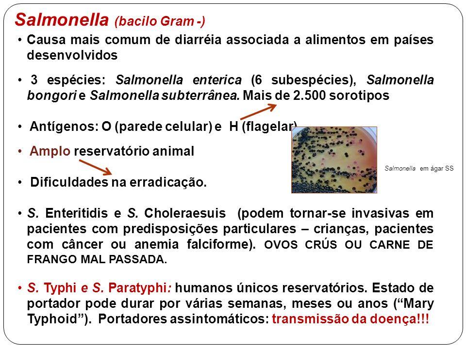 Salmonella (bacilo Gram -) Causa mais comum de diarréia associada a alimentos em países desenvolvidos 3 espécies: Salmonella enterica (6 subespécies),