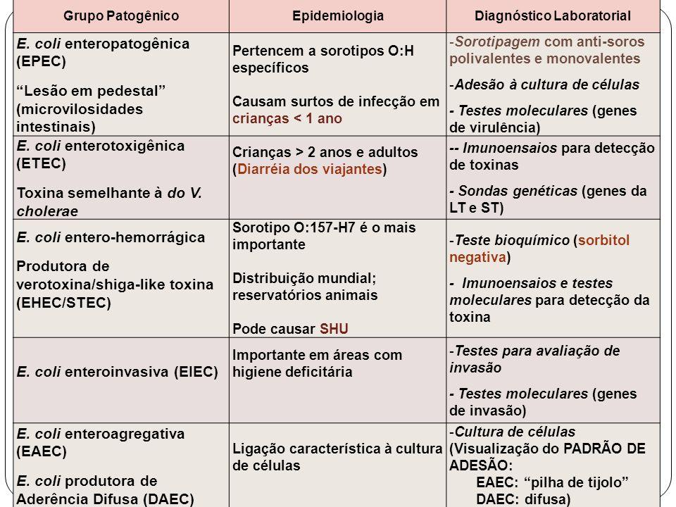 Grupo PatogênicoEpidemiologiaDiagnóstico Laboratorial E. coli enteropatogênica (EPEC) Lesão em pedestal (microvilosidades intestinais) Pertencem a sor