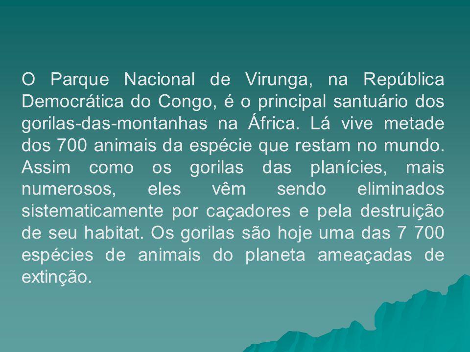 O Parque Nacional de Virunga, na República Democrática do Congo, é o principal santuário dos gorilas-das-montanhas na África. Lá vive metade dos 700 a