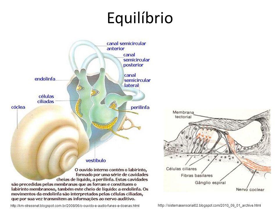 Equilíbrio http://km-stressnet.blogspot.com.br/2008/06/o-ouvido-e-audio-funes-e-doenas.html http:// sistemasensorial02.blogspot.com/2010_09_01_archive