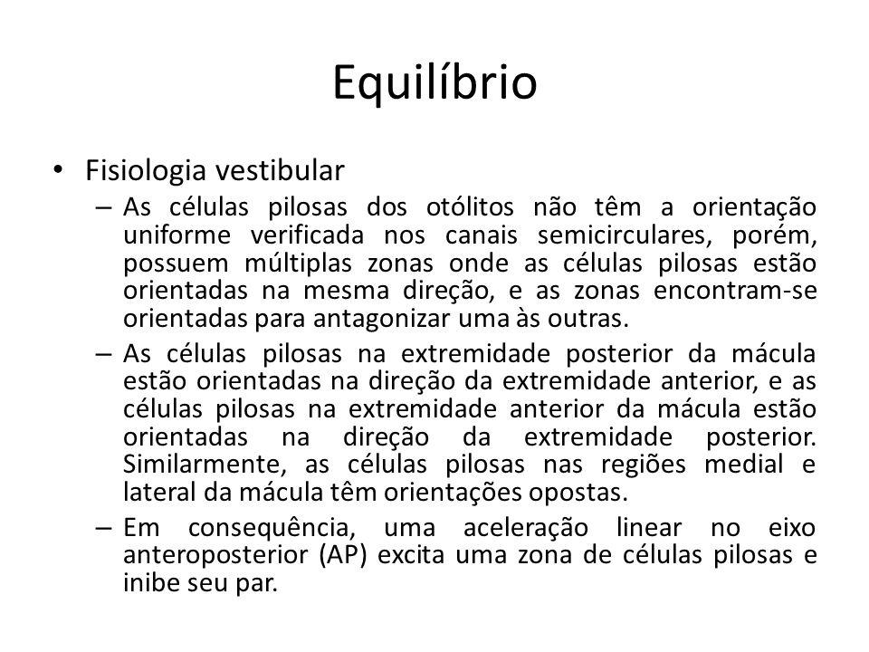 Equilíbrio Fisiologia vestibular – As células pilosas dos otólitos não têm a orientação uniforme verificada nos canais semicirculares, porém, possuem