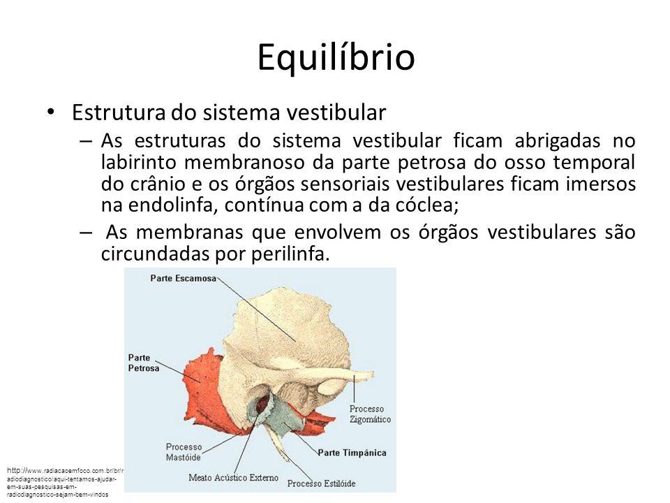 Equilíbrio http://www.cabuloso.xpg.com.br/Anatomia-Humana/Sistema-Sensorial/Percepcao-da-forca-Gravitacional-e-do-Movimento.htm