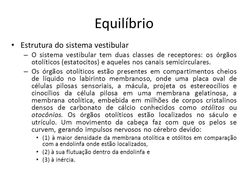 Equilíbrio Fisiologia vestibular – Não existem dados comparativos da função vestibular nas várias espécies, mas é provável que as arborícolas e as que vivem a altitudes tenham um sentido vestibular mais desenvolvido.