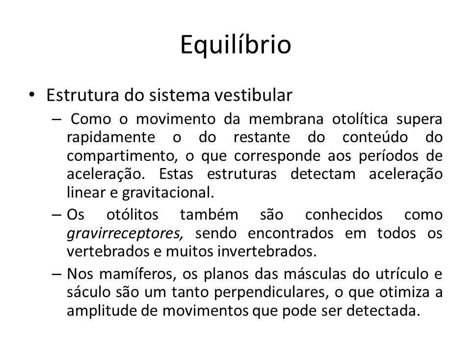 Equilíbrio Estrutura do sistema vestibular – Os três canais semicirculares de cada lado da cabeça estão orientados de modo a ficar aproximadamente perpendiculares entre si nos três planos do espaço.