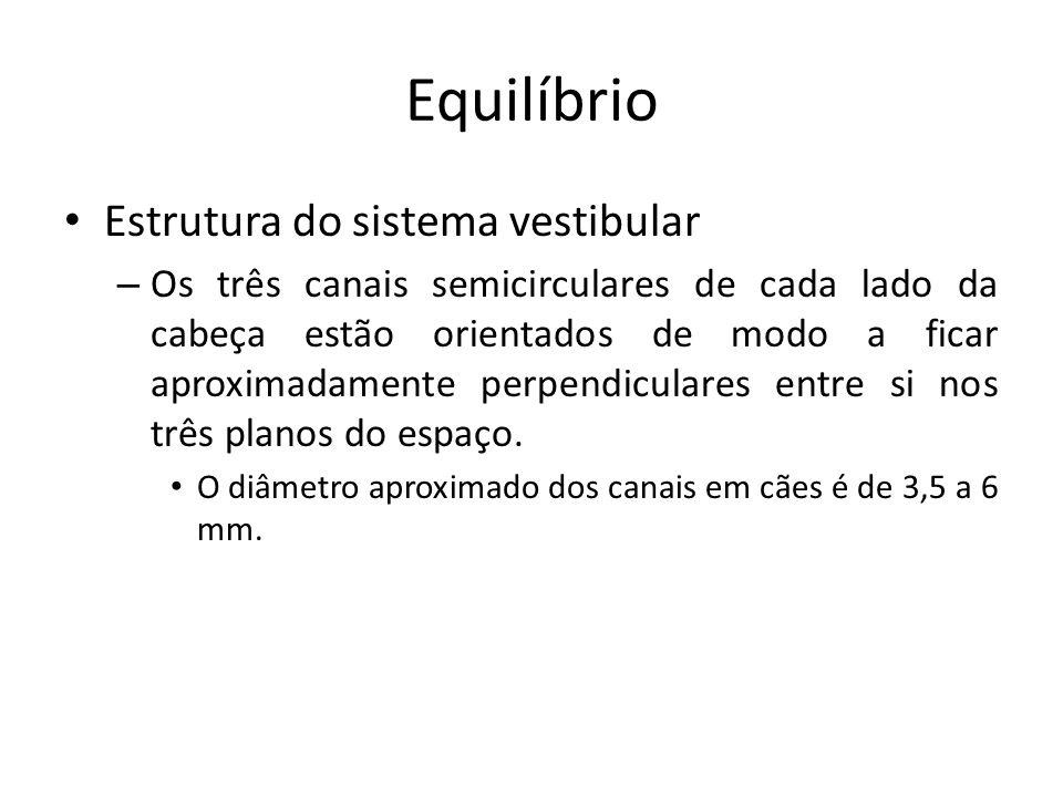 Equilíbrio Estrutura do sistema vestibular – Os três canais semicirculares de cada lado da cabeça estão orientados de modo a ficar aproximadamente per