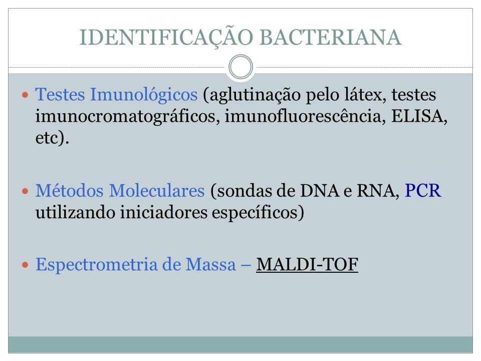 IDENTIFICAÇÃO BACTERIANA Testes Imunológicos (aglutinação pelo látex, testes imunocromatográficos, imunofluorescência, ELISA, etc). Métodos Moleculare