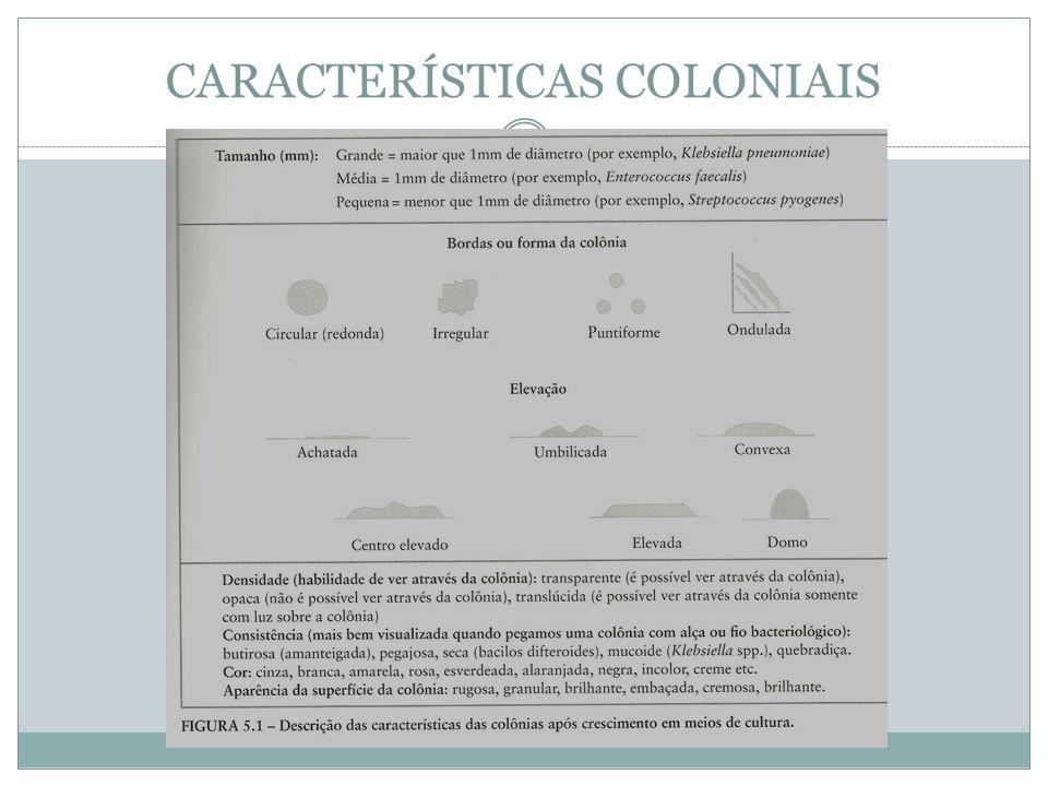 IDENTIFICAÇÃO BACTERIANA Testes Bioquímicos (produção de urease, utilização de citrato, produção de gás, etc).