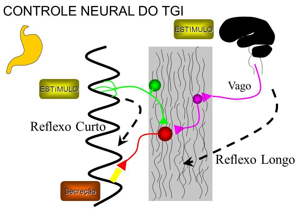 ESTIMULO Reflexo Longo Reflexo CurtoESTíMULO Vago Secreção CONTROLE NEURAL DO TGI