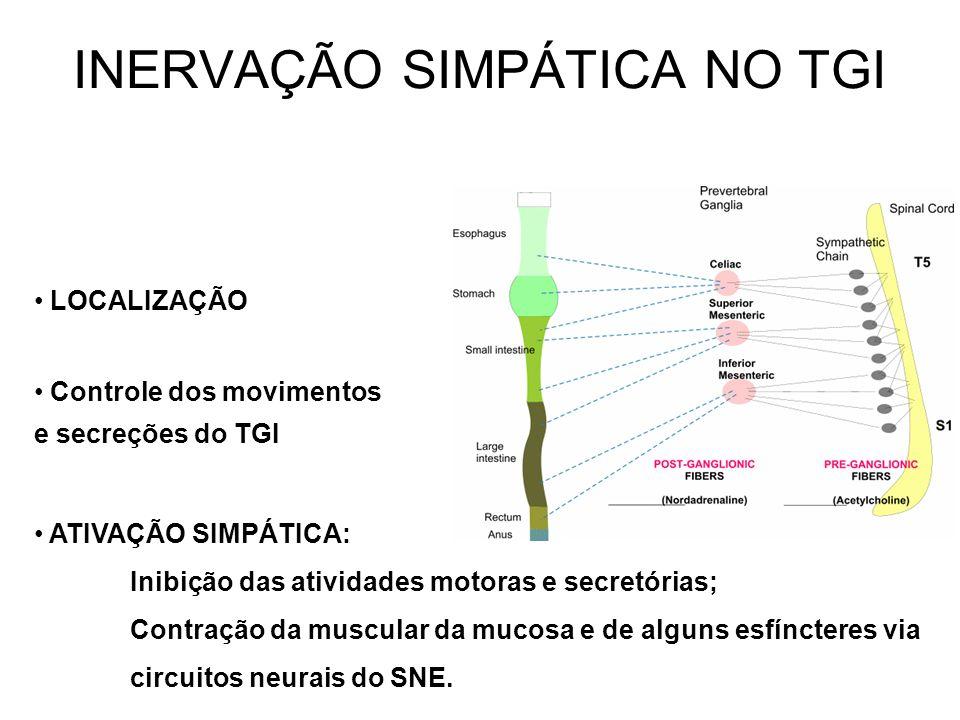 INERVAÇÃO SIMPÁTICA NO TGI LOCALIZAÇÃO Controle dos movimentos e secreções do TGI ATIVAÇÃO SIMPÁTICA: Inibição das atividades motoras e secretórias; C