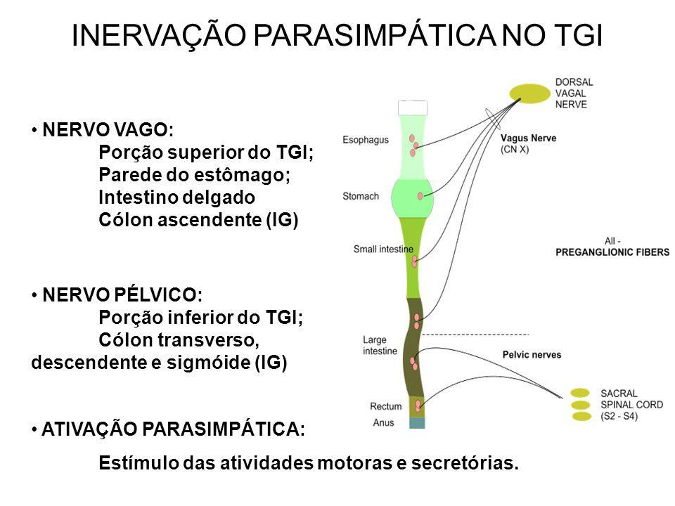 INERVAÇÃO PARASIMPÁTICA NO TGI NERVO VAGO: Porção superior do TGI; Parede do estômago; Intestino delgado Cólon ascendente (IG) ATIVAÇÃO PARASIMPÁTICA: