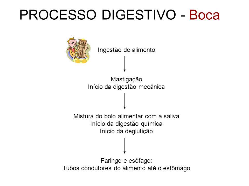 PROCESSO DIGESTIVO - Boca Ingestão de alimento Mastigação Início da digestão mecânica Mistura do bolo alimentar com a saliva Início da digestão químic