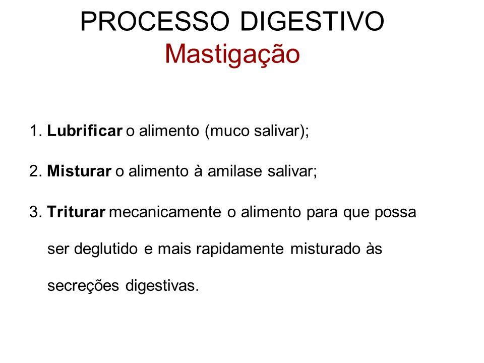 1. Lubrificar o alimento (muco salivar); 2. Misturar o alimento à amilase salivar; 3. Triturar mecanicamente o alimento para que possa ser deglutido e