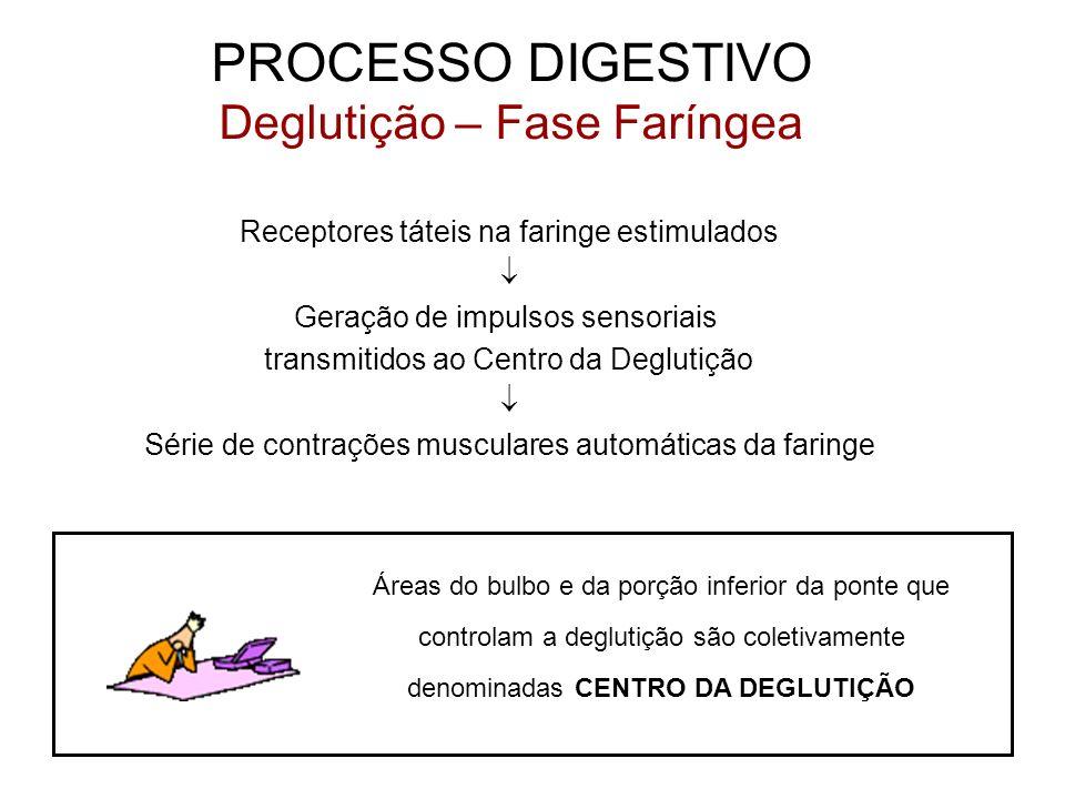 PROCESSO DIGESTIVO Deglutição – Fase Faríngea Receptores táteis na faringe estimulados Geração de impulsos sensoriais transmitidos ao Centro da Deglut