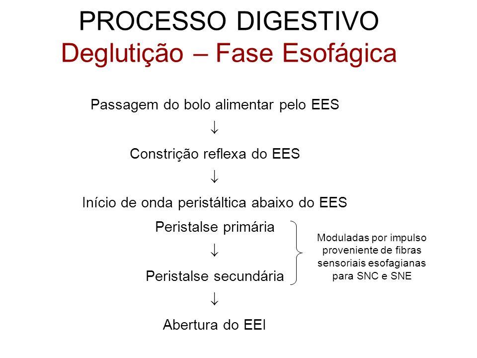 PROCESSO DIGESTIVO Deglutição – Fase Esofágica Passagem do bolo alimentar pelo EES Constrição reflexa do EES Início de onda peristáltica abaixo do EES