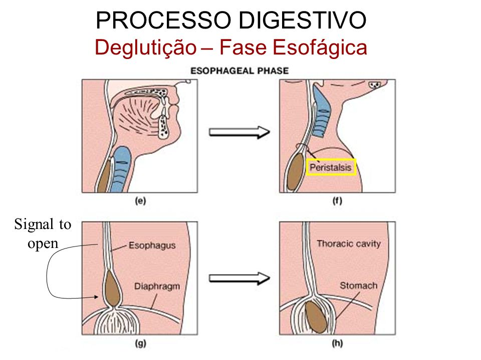 Signal to open PROCESSO DIGESTIVO Deglutição – Fase Esofágica