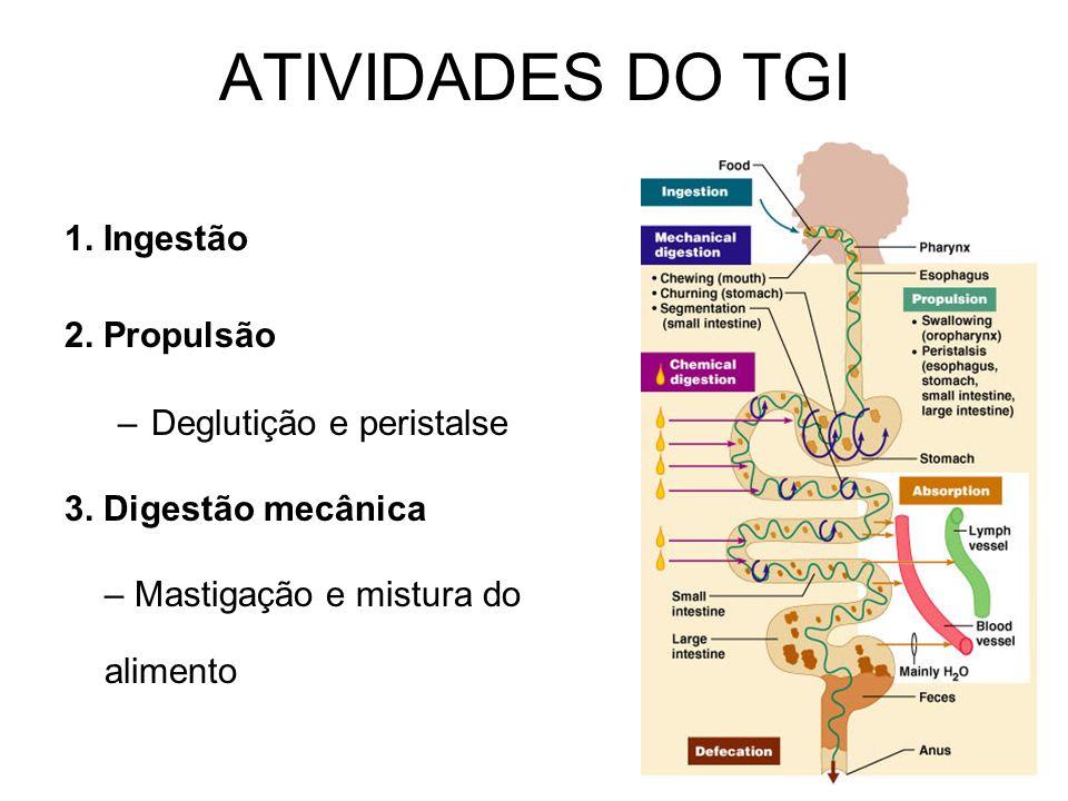 ATIVIDADES DO TGI 1. Ingestão 2. Propulsão –Deglutição e peristalse 3. Digestão mecânica – Mastigação e mistura do alimento