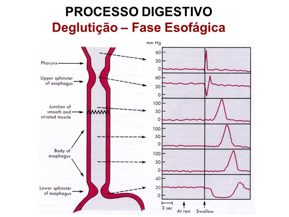 PROCESSO DIGESTIVO Deglutição – Fase Esofágica