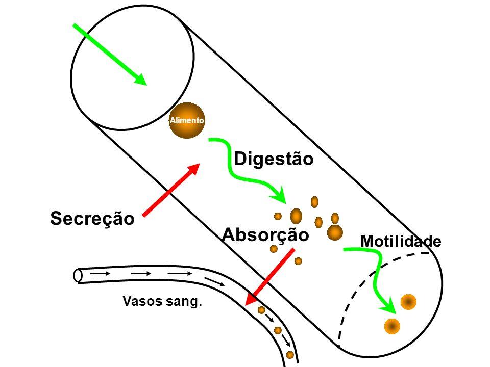 Alimento Secreção Digestão Absorção Vasos sang. Motilidade