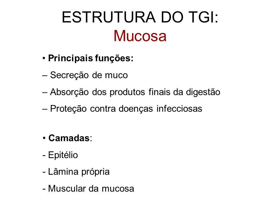 ESTRUTURA DO TGI: Mucosa Principais funções: – Secreção de muco – Absorção dos produtos finais da digestão – Proteção contra doenças infecciosas Camad