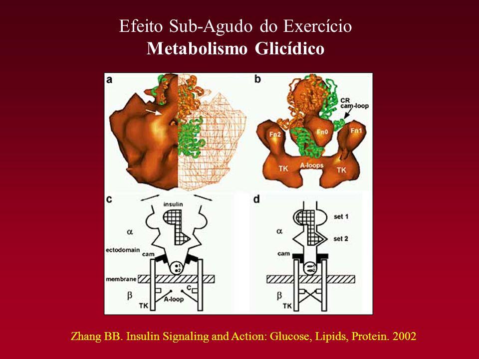 Efeito Sub-Agudo do Exercício Metabolismo Glicídico Zhang BB. Insulin Signaling and Action: Glucose, Lipids, Protein. 2002