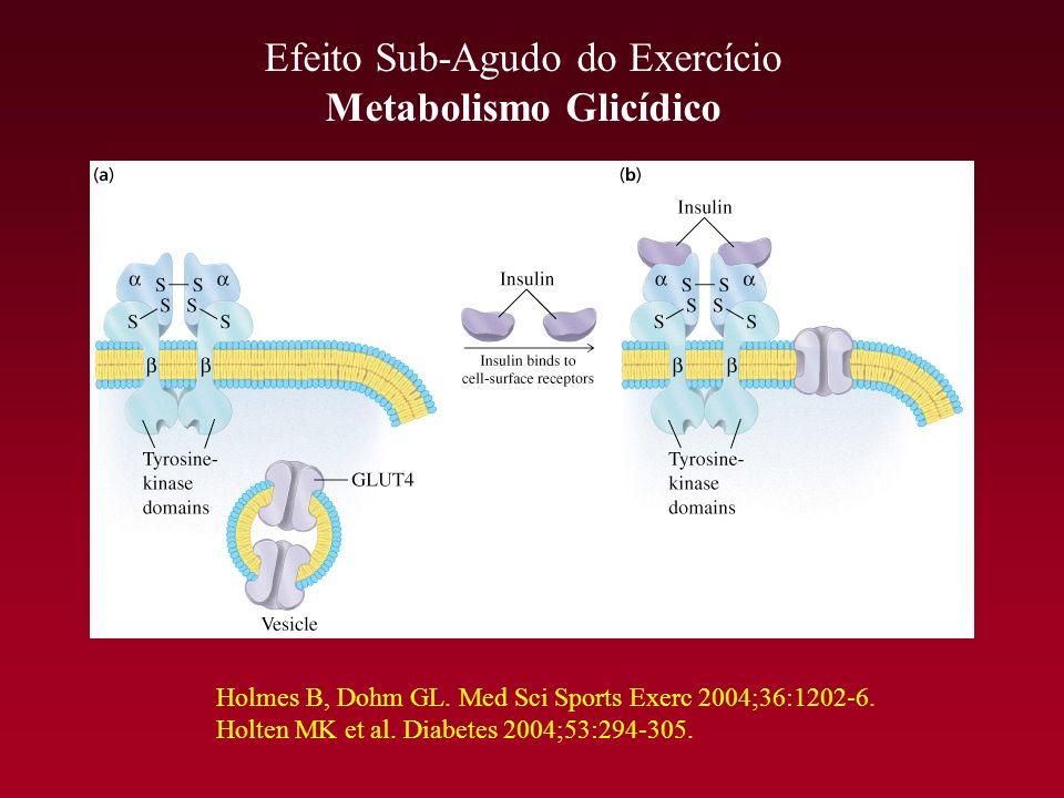 Efeito Sub-Agudo do Exercício Metabolismo Glicídico Holmes B, Dohm GL. Med Sci Sports Exerc 2004;36:1202-6. Holten MK et al. Diabetes 2004;53:294-305.