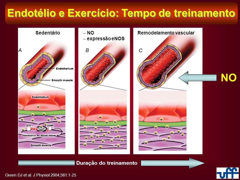 Green DJ et al. J Physiol 2004;561:1-25 Endotélio e Exercício: Tempo de treinamento Sedentário Duração do treinamento NO expressão eNOS NO Remodelamen