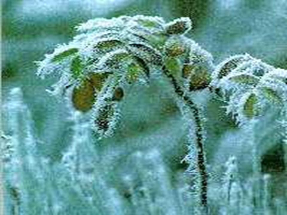 Geada branca Consiste no depósito de gelo cristalino na superfície do solo, das plantas e dos objetos, e que se formam de maneira semelhante ao orvalho, mas com temperaturas inferiores à de congelamento.