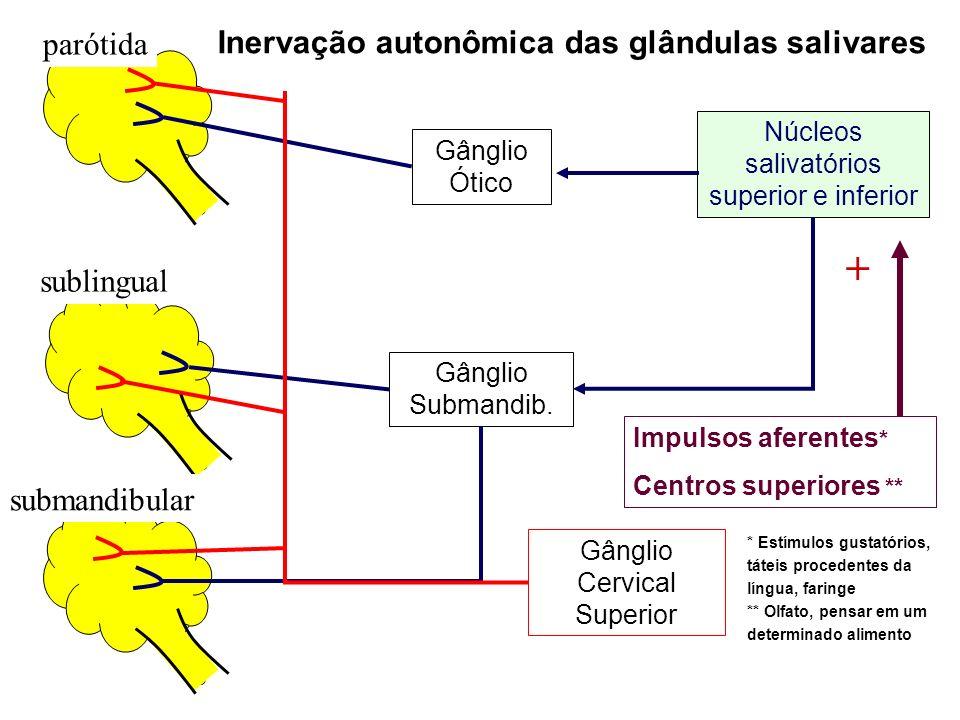 Regulação da secreção salivar Estimulação parassimpática: síntese e secreção de amilase salivar e mucinas fluxo sangüíneo para as glândulas Estimulação simpática: Menos potente que a parassimpática Constrição dos vasos sanguíneos = fluxo sanguíneo para as glândulas salivares Efeito comum: contração das células mioepiteliais
