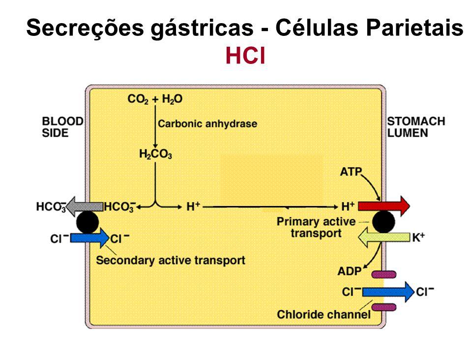 Estímulos: Distensão gástrica Ativação de quimioreceptores por peptídeos Gastrina Histamina Secreções gástricas - Células Parietais HCl