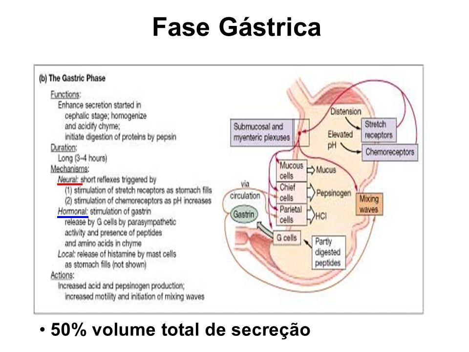 Eventos excitatórios: pH; distensão do duodeno, presença de gordura, ácido, ou quimo hipertônico e/ou irritantes no duodeno Fase Intestinal